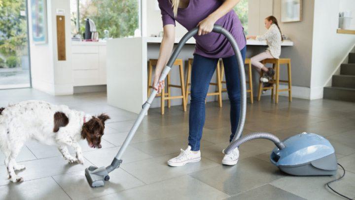 Cómo desinfectar la casa cuando hay perros, gatos y mascotas